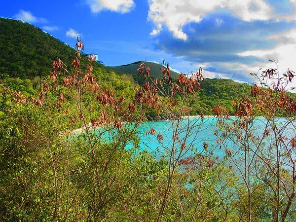 Karibischer Traumstrand mit türkisem Meer