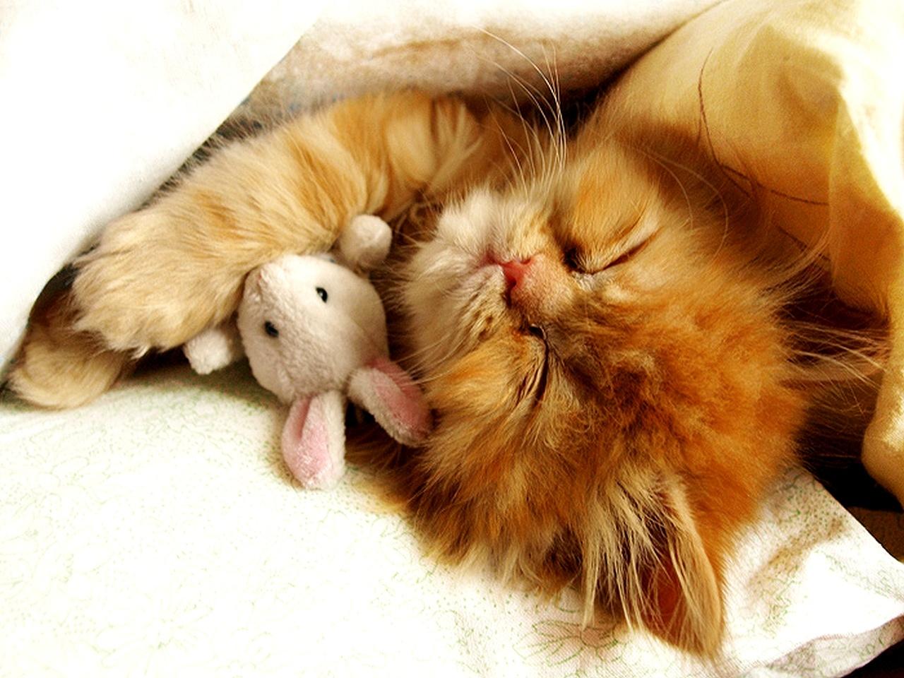 Cute Baby Kittens Sleeping