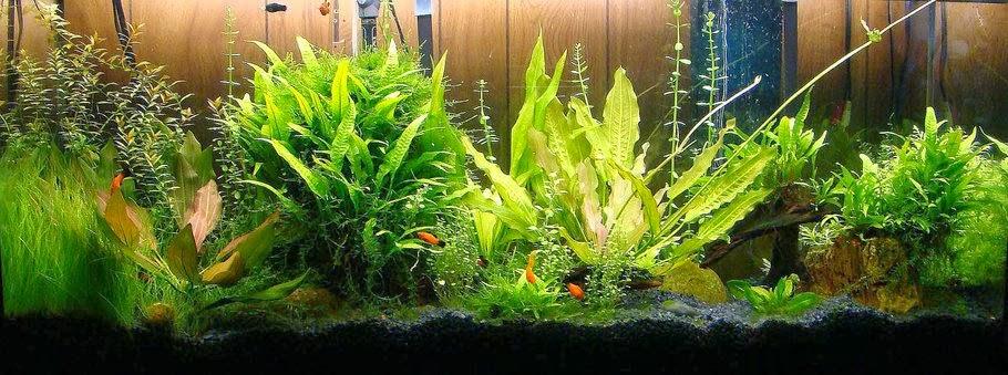 la nouvelle aquariophilie bien d marrer un aquarium d 39 eau douce. Black Bedroom Furniture Sets. Home Design Ideas