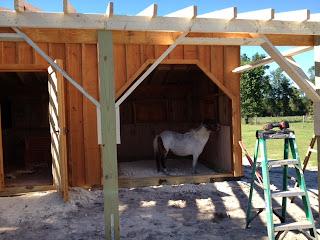 Horses love Barns