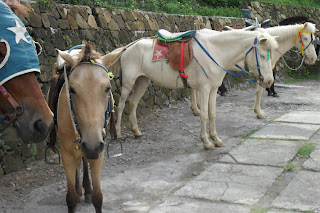 Kuda Model