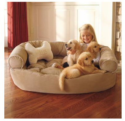 Taking care of your puppy 5 things to remember about pet animals and pet care Comfy couch dog bed