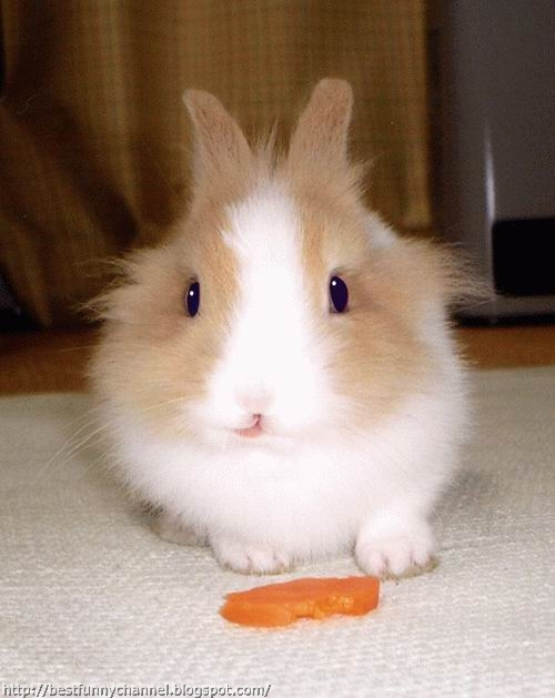 Bunny and carrot.
