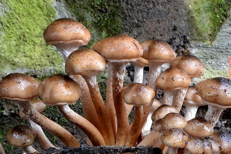 Quello che distrugge un fungo di unghie e piede