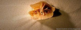 image de couverture pour Facebook la rose des sables