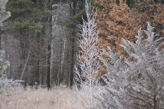 photo of hoar frost on trees