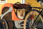 Hunden Åskar