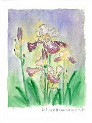 Aquarelle und Kunstdrucke (click Image)