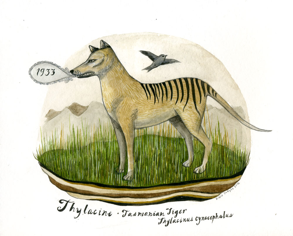 tasmanian tiger report · nick mooney on the thylacine footage - breakfast with steve and basil - duration: 4:19 geckos and gum leaves 1,903 views.