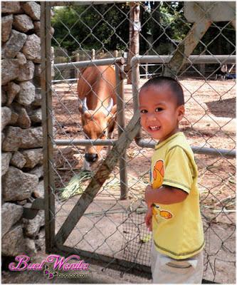 Mini Zoo Taman Teruntum. Tempat menarik dan best di Kuantan Pahang Malaysia