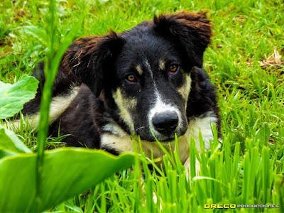 imagen perro en galipan