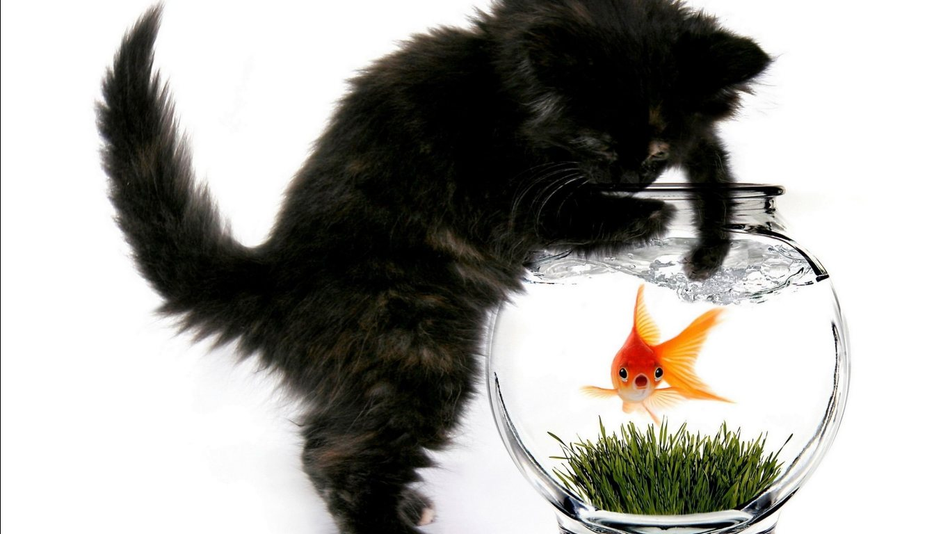 funny cat wallpapers hd