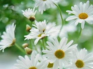 http://sehatnyahidup1.blogspot.com/2015/05/jenis-bunga-membantu-mengobati-penyakit.html