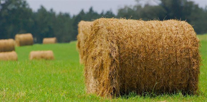 nc field of hay bales