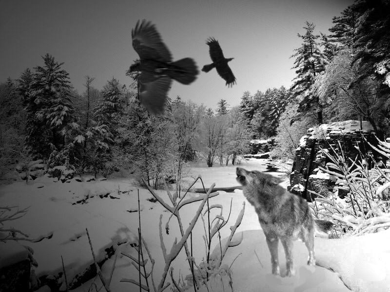 ravens and wolves relationship
