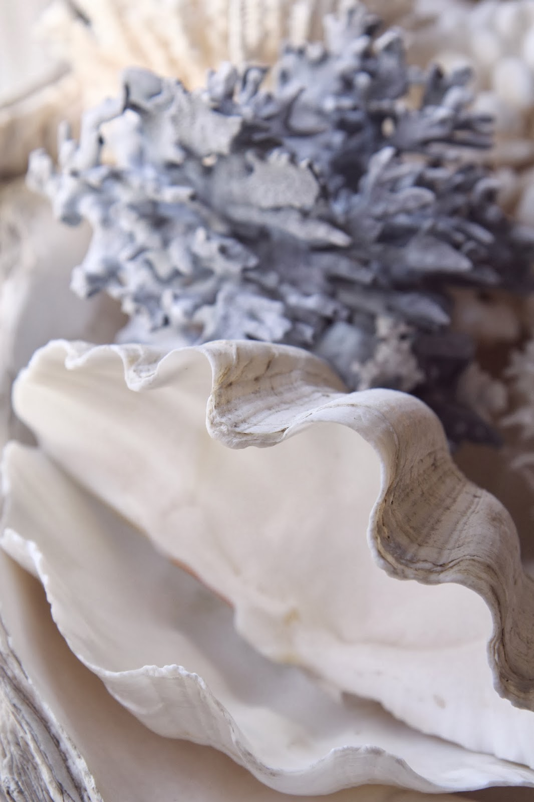 Blue Coral and clam shell: Nature's Sculptures