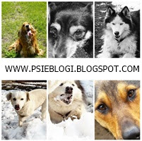 Zapraszam na Psie Blogi!