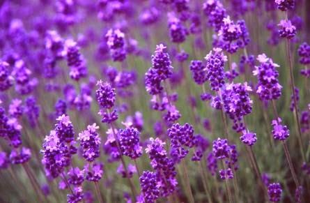 Cách trị mụn bằng các loại hoa hiệu quả nhanh chóng