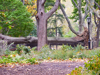 Central Park Manhattan after Sandy hurricane