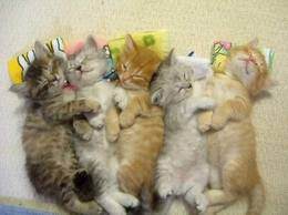 Anak kucing Imut
