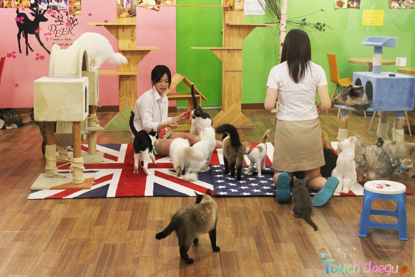The visitors are playing with lovable cats