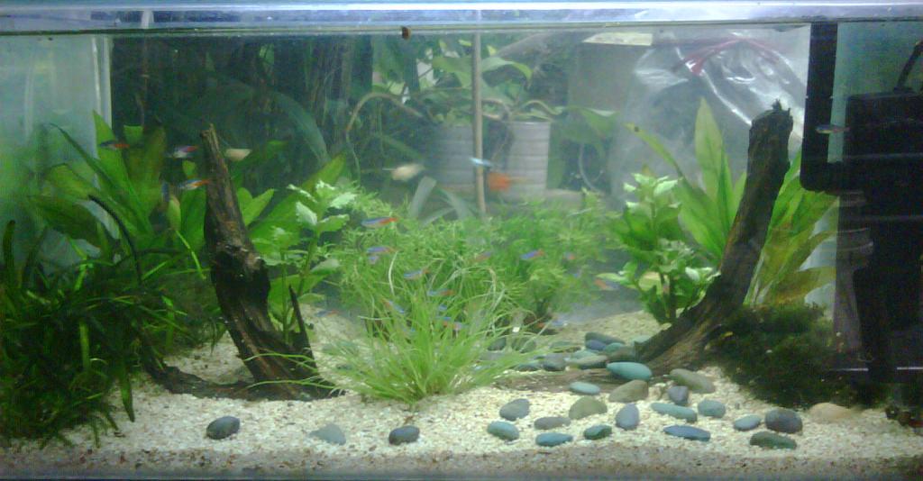Aquascape: January 2012