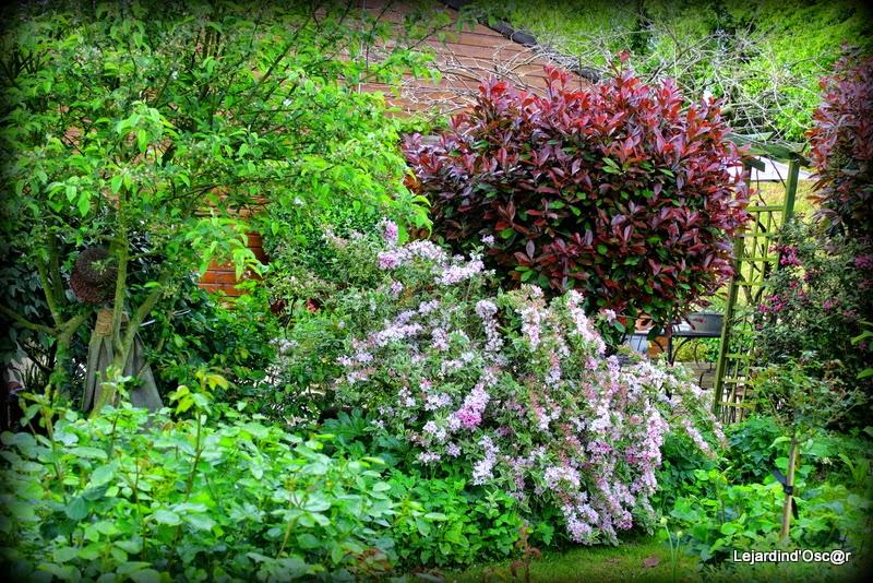 Le jardin d 39 oscar mai 2015 for Jardin mai 2015