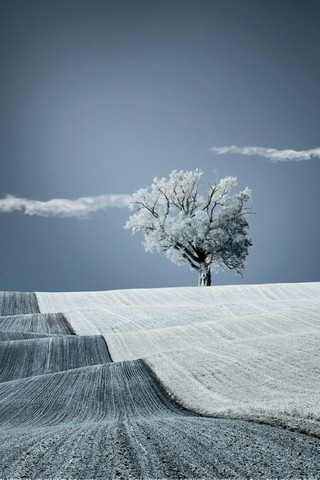 320x480 Awesome Snow Winter Tree Iphone Wallpapers HD