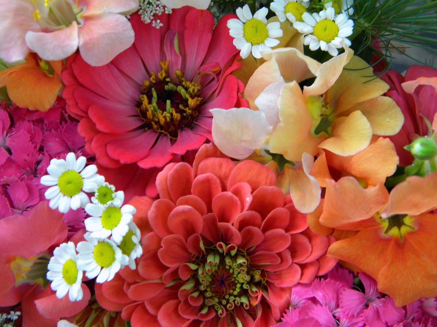 Wedding flowers from springwell zinnia bouquets in peach and coral spring lingered a little longer than usual this year but with the typical humidity of the deep south streaming in over these last couple of weeks izmirmasajfo