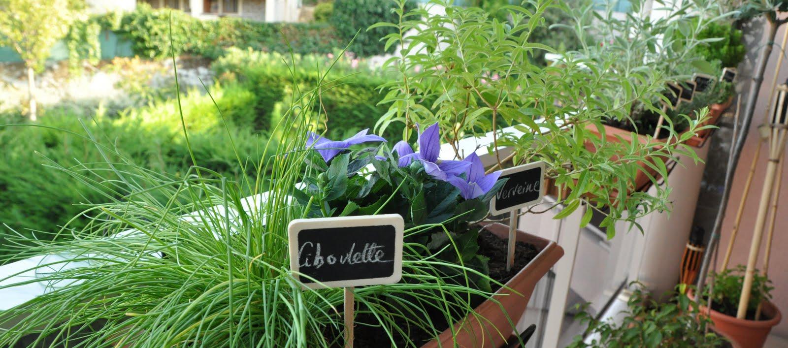 Au comptoir de m que cuisiner avec ces herbes aromatiques - Cuisiner avec la sauge ...
