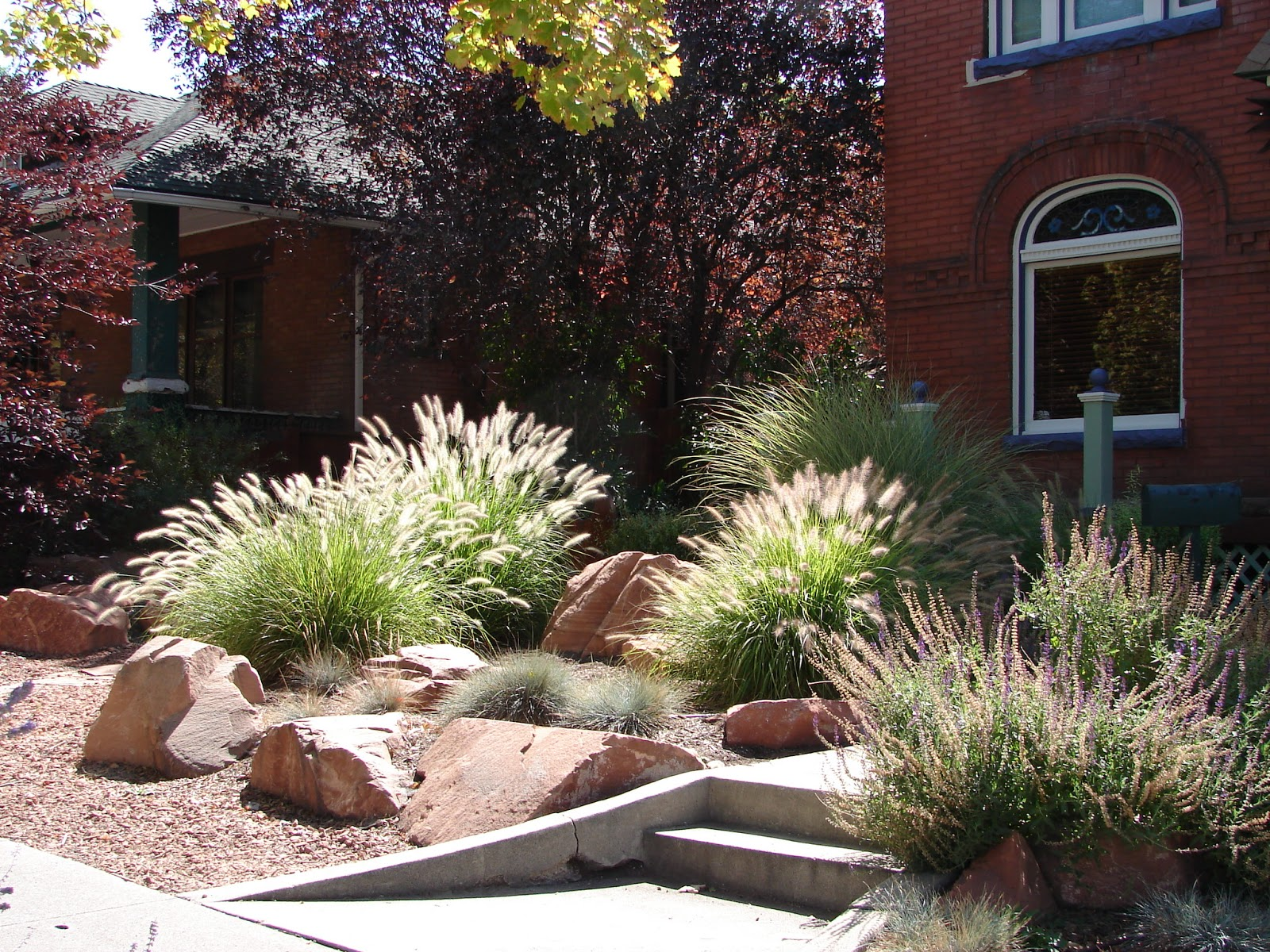 New utah gardener pennisetum alopecuroides waterwise for Hardy fountain grass