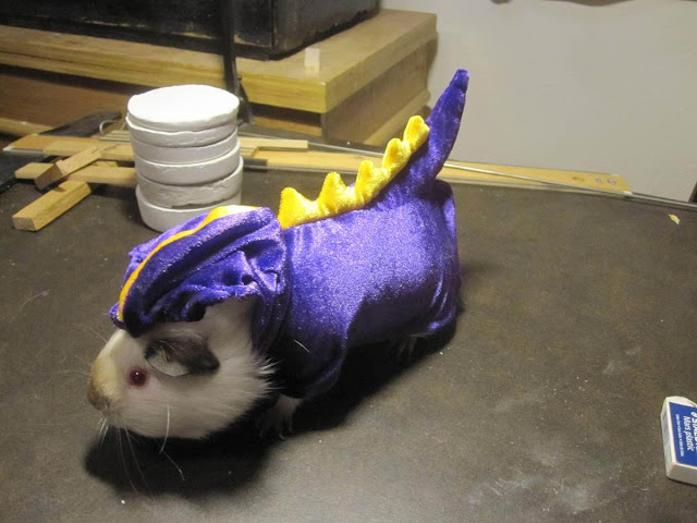 Funny and creative pet costumes, guinea pig costumes, dressed up guinea pigs