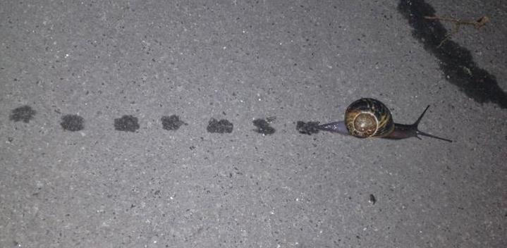 Snail Steps