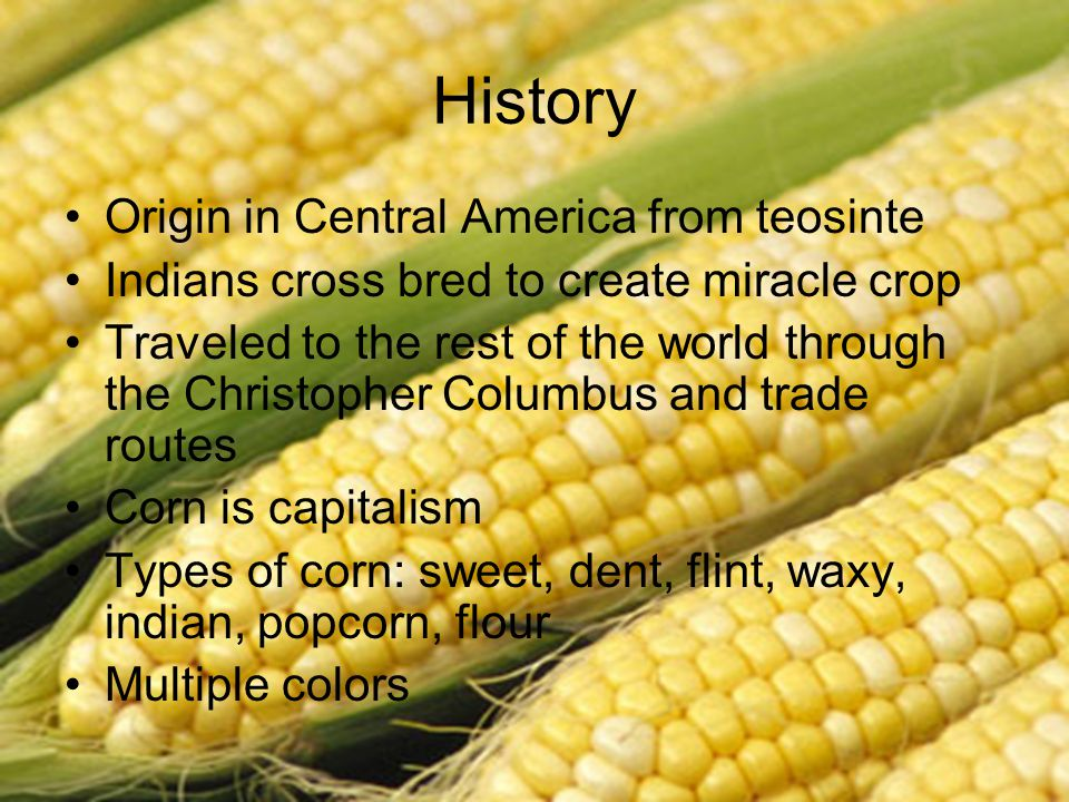 The True American Crop Is Corn