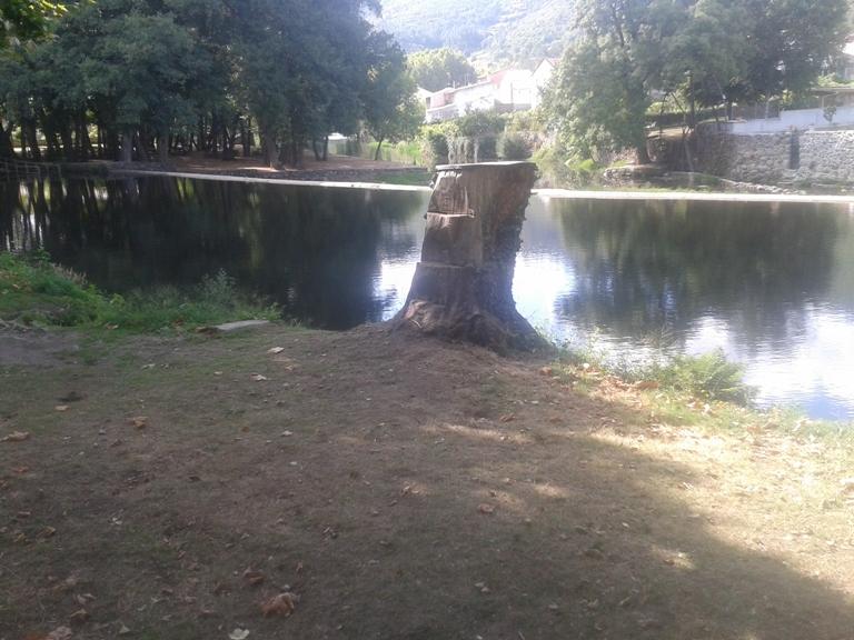 Tronco de árvore aproveitado como prancha de saltos