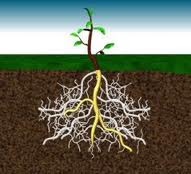 Anim agro technology soil borne disease management for Soil borne diseases