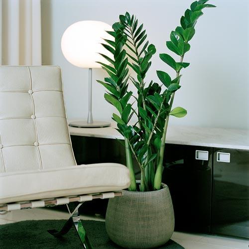Casa saud vel plantas na decora o oferecem bem estar - Plantas de agua para interiores ...