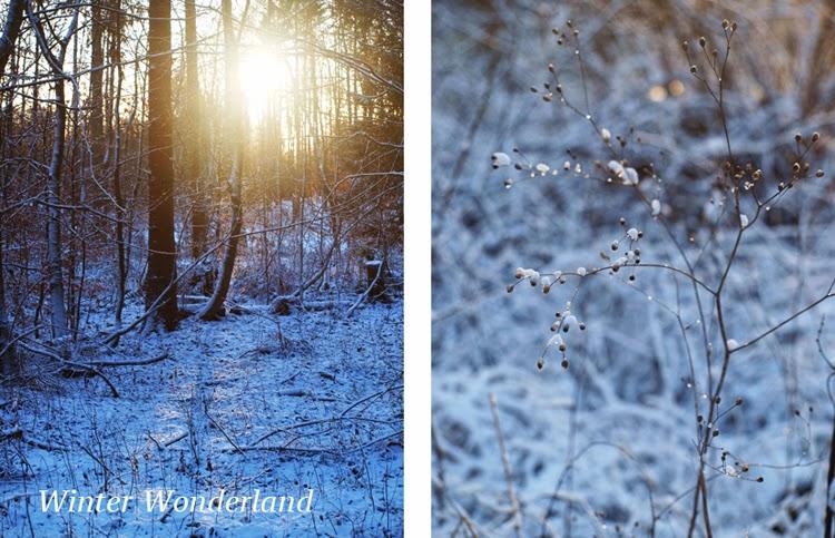 Skov med sne og is