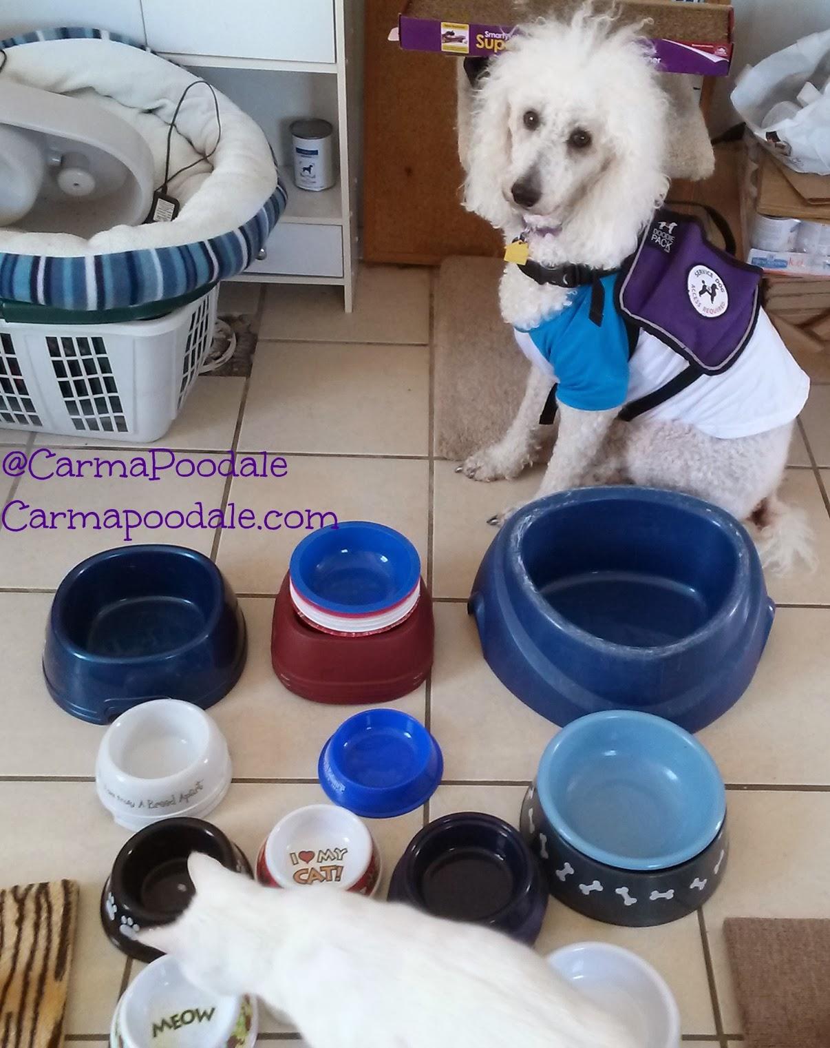 carma sitting by bowls