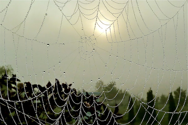 spider webs in a foggy morning light