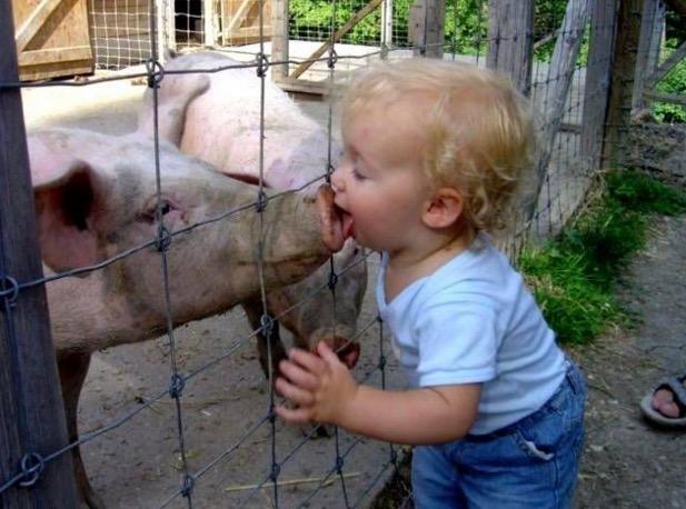 Kisah Lelaki yang Memiliki Ibubapa Sepasang Babi