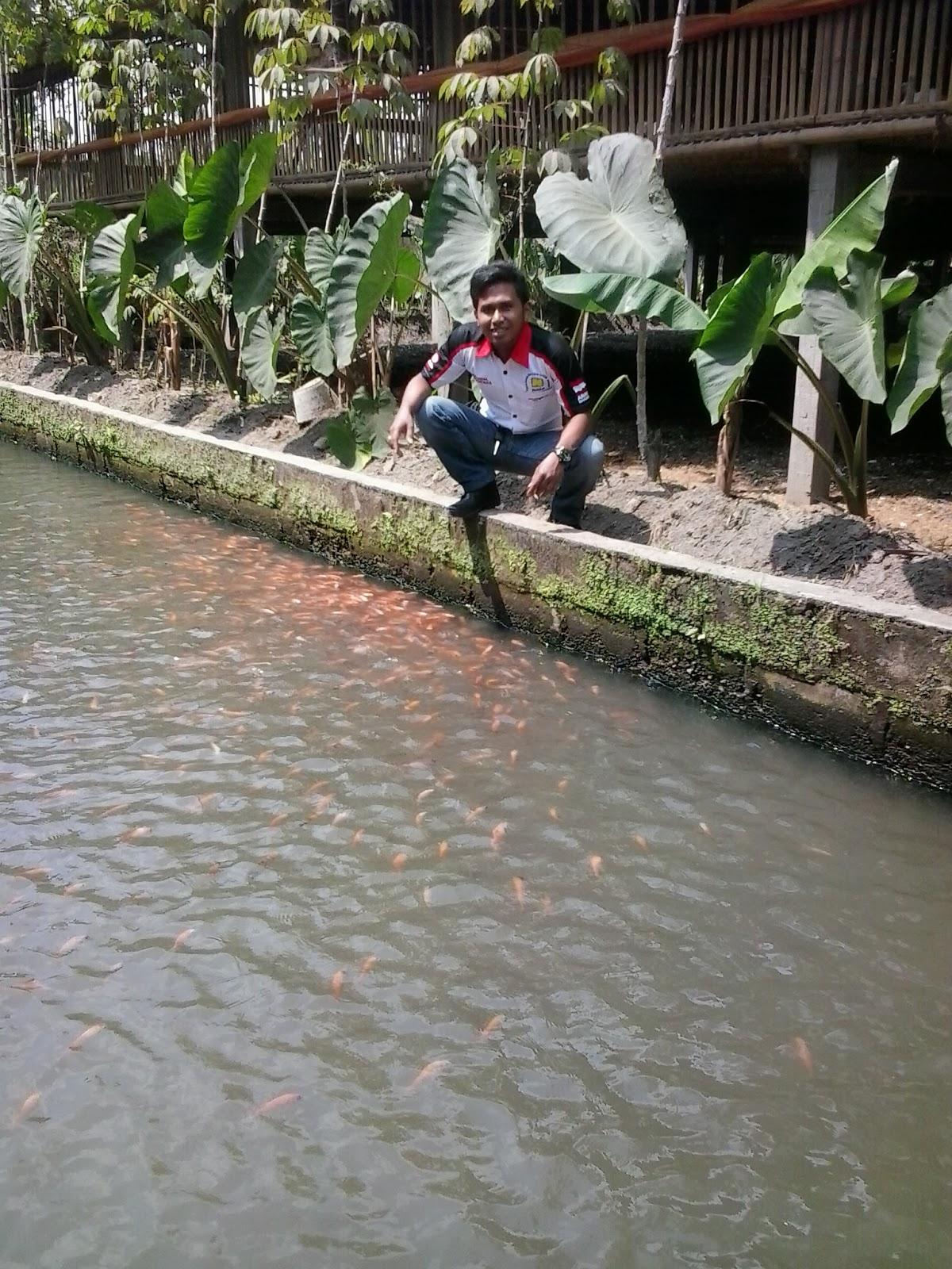 Panduan Cara Budidaya Ikan Nila,Ternak Ikan Nila 50-55 ...