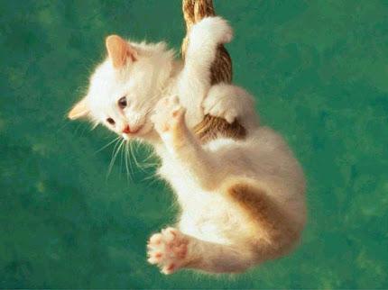 foto anak kucing lucu