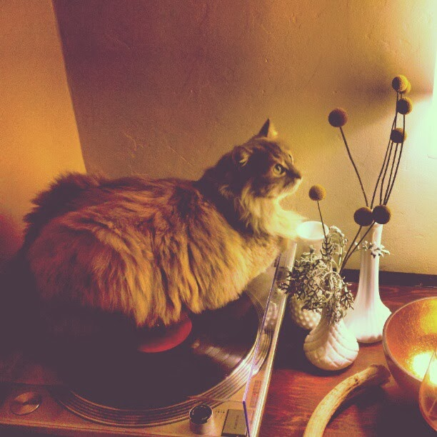 cat on a record player with flowers