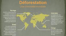 Infographie : déforestation et trafic de bois illégal