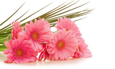 أجمل صور الورود , ورد جميل , موقع جزيرة خيال