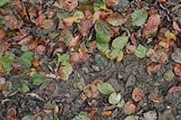 free ground with autumn leaves texture