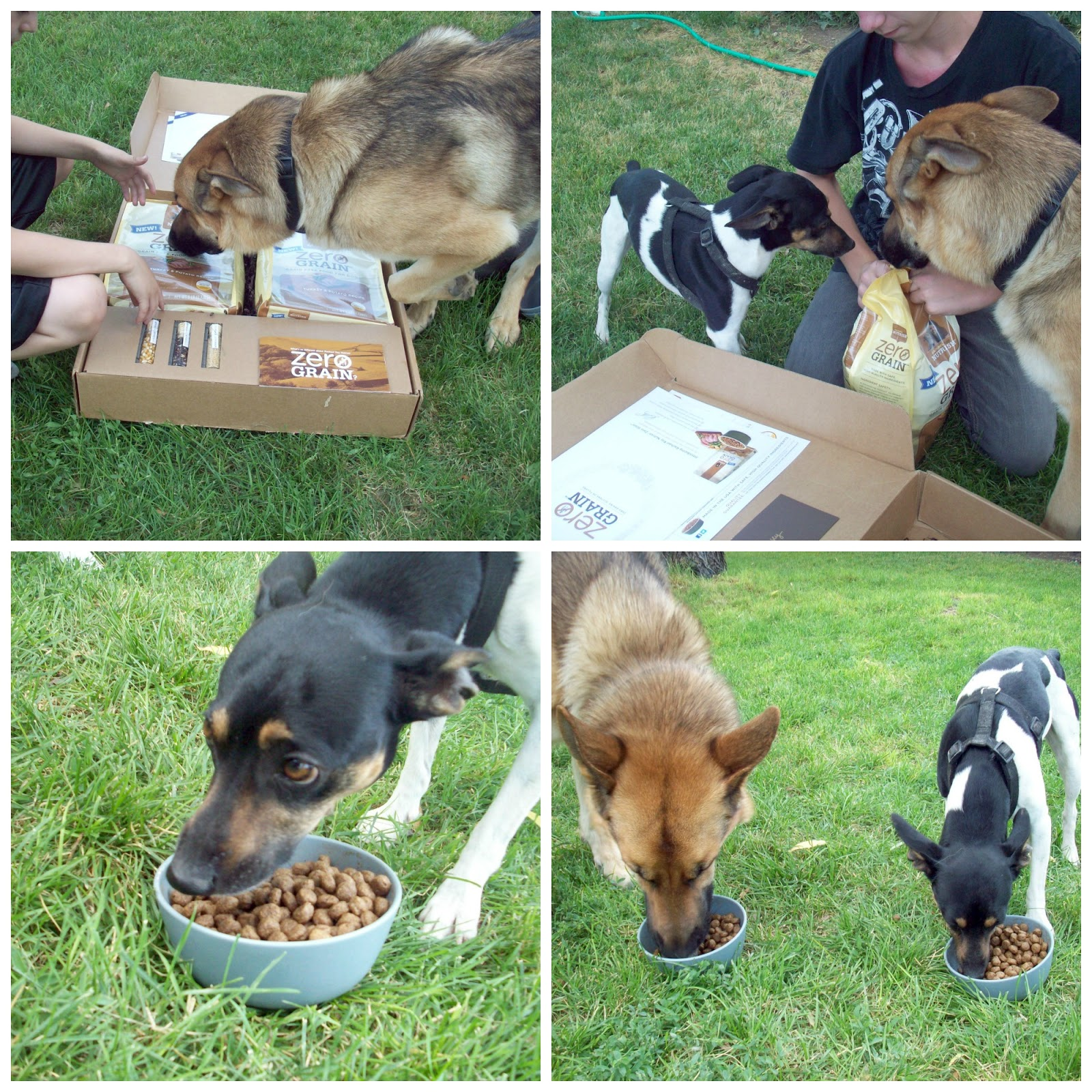 Is Rachael Ray Just  Dog Food Good