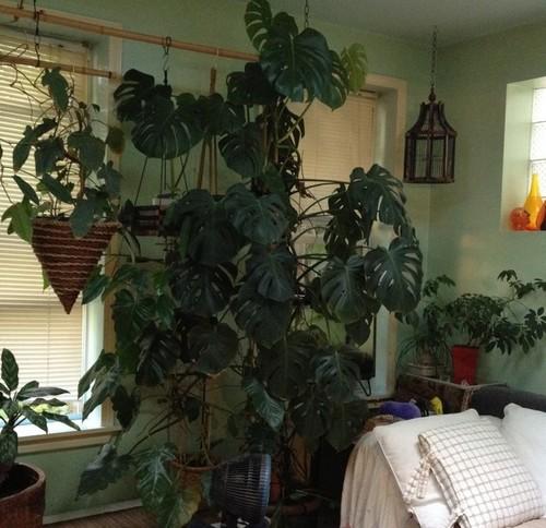4 plantas de interior que necesitan poca luz lemmus noticias - Plantas que no necesitan luz ...