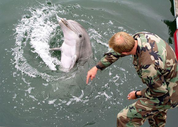 AL Ukraina melatih lumba-lumba